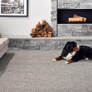 Pet friendly Carpet | Boyer's Floor Covering